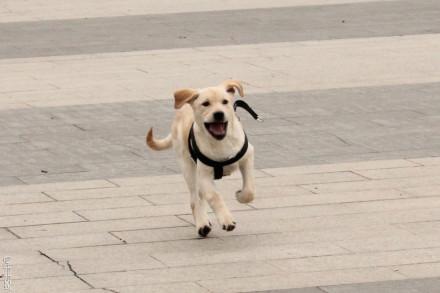各种动物的奔跑速度