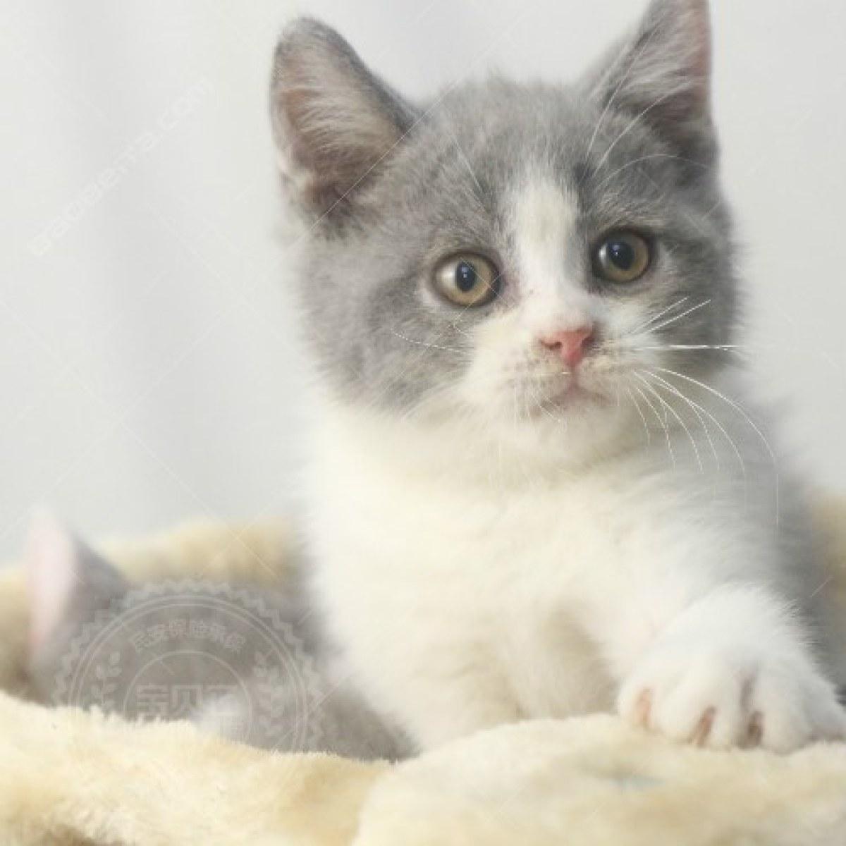 可爱蓝猫桌面壁纸